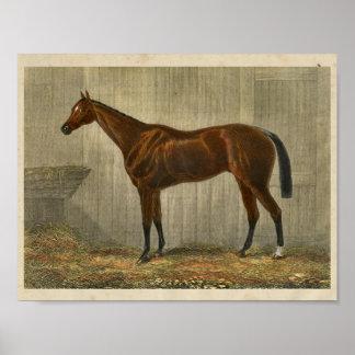 Azul Cown do impressão 1873 do cavalo do vintage