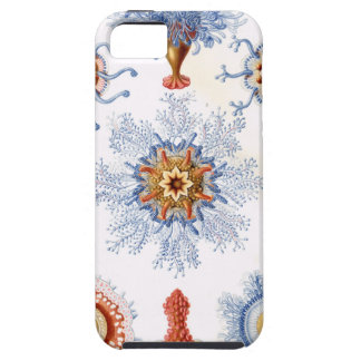 Azul de Haeckel Capa De iPhone 5 Case-Mate