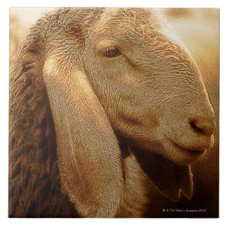 Azulejo De Cerâmica Dolomites orelhudas longas dos carneiros, Italia