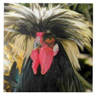 Azulejo De Cerâmica Foto má da galinha do cabelo