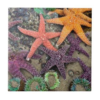 Azulejo De Cerâmica Gemas do mar