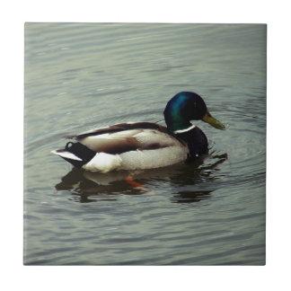 Azulejo De Cerâmica Pato na água