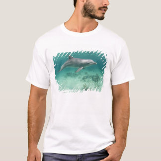 Bahamas, ilha de Bahama grande, porto franco, Camisetas