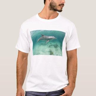 Bahamas, ilha de Bahama grande, porto franco, T-shirts