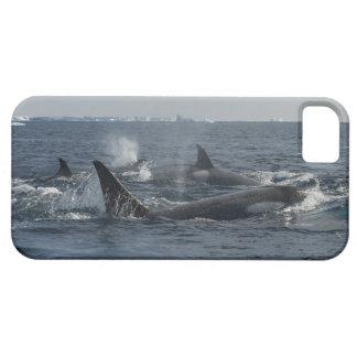baleia de assassino capa barely there para iPhone 5