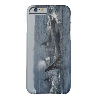 baleia de assassino capa barely there para iPhone 6