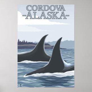 Baleias 1 da orca - Cordova Alaska Poster