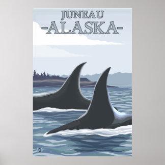 Baleias #1 da orca - Juneau, Alaska Pôster