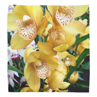 Bandana Orquídeas amarelas do Cymbidium