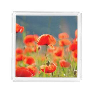 Bandeja De Acrílico A papoila vermelha das papoilas floresce o céu