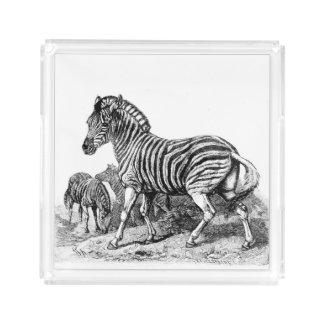 Bandeja do perfume da gravura da zebra do vintage