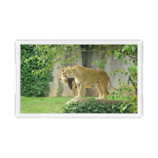 Bandeja do serviço de Acryclic da leoa do leão