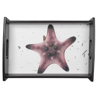 Bandeja Estrela do mar macro rara na areia branca