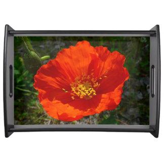 Bandeja Flor colorida da papoila vermelha do Alasca