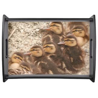 Bandeja O bebê Ducks patos selvagens dos animais dos