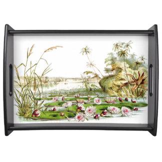 Bandeja O jardim Waterlily da água floresce a lagoa de
