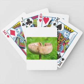 Baralhos Para Poker Cogumelo de Brown em grass.JPG verde