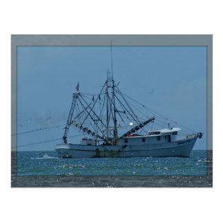 Barco do camarão cartão postal