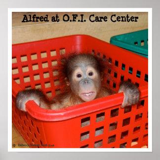 Bebê animal Alfred Poster