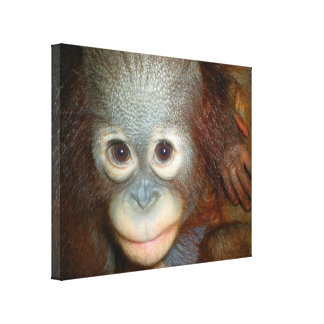 Bebê do orangotango