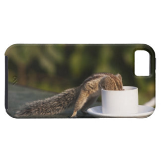 Bebendo do esquilo do copo de café no indiano capa para iPhone 5