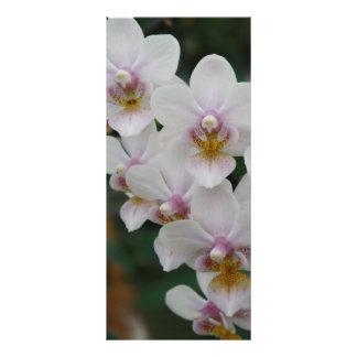 Beleza exótica - orquídea do Phalaenopsis 10.16 X 22.86cm Panfleto