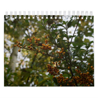 Beleza natural, calendário