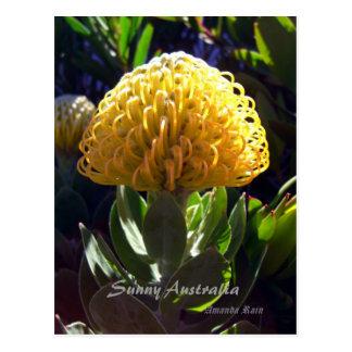 Beleza perfeita, Austrália ensolarada Cartoes Postais