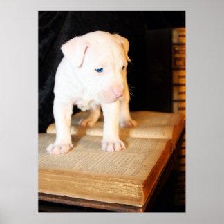 Bíblia velha, filhote de cachorro novo posters