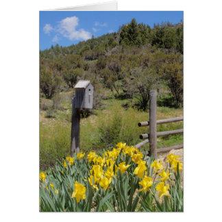 Birdhouse e Daffodils Cartão Comemorativo