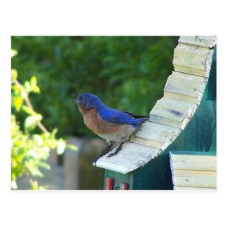 bluebird cartão postal