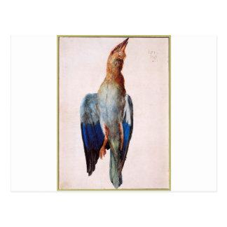 Bluebird inoperante por Albrecht Durer Cartão Postal