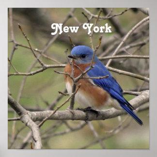 Bluebird Impressão