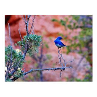 Bluebirds Cartão Postal