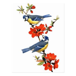 Bluebirds com cartão das flores