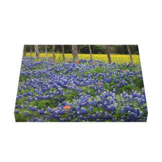 Bluebonnets rústicos impressão de canvas envolvidas