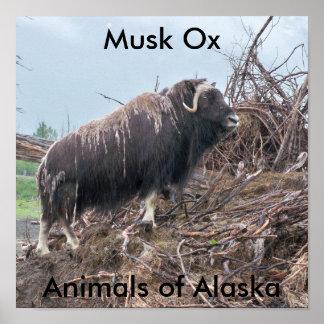 Boi-Animais do Musk do poster de Alaska Pôster