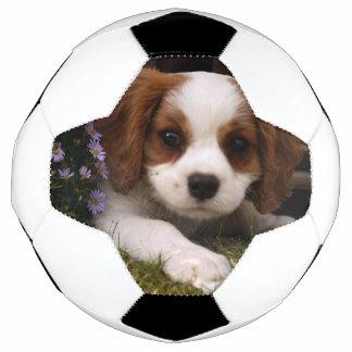 Bola De Futebol Filhote de cachorro descuidado do Spaniel de rei