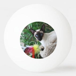 Bola Para Ping Pong Gato Siamese bonito que joga com brinquedo