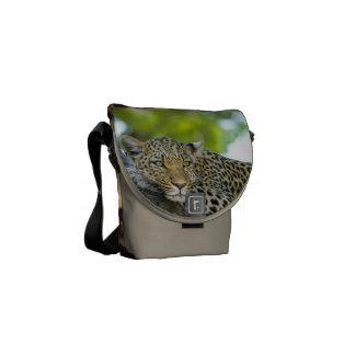 Bolsa Mensageiro Do destino animal do design do impressão do gato