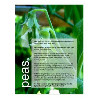 Bom guia crescente: Ervilhas & Sweetcorn Cartão Postal