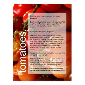 Bom guia crescente: Tomates & alho Cartão Postal