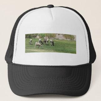 Boné (2) carneiros do Big Horn IMG_1180