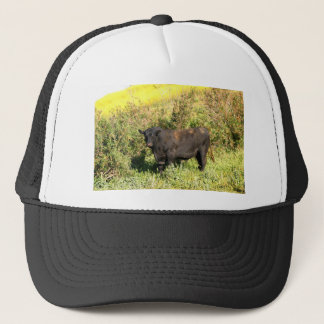 Boné Bull