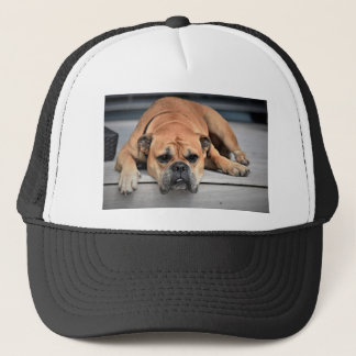 Boné Cão de Bull