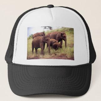Boné Elefantes selvagens indianos