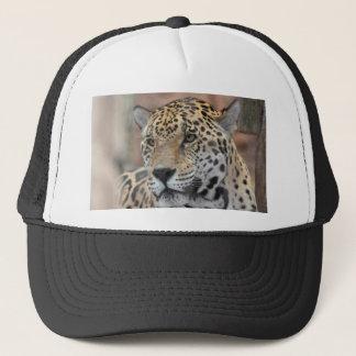 Boné Gato do chapéu