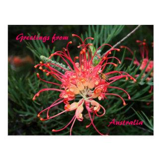 Bonito no rosa, cumprimentos de, Austrália Cartao Postal
