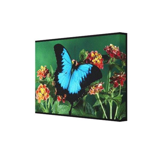 Borboleta azul e preta impressão de canvas esticadas