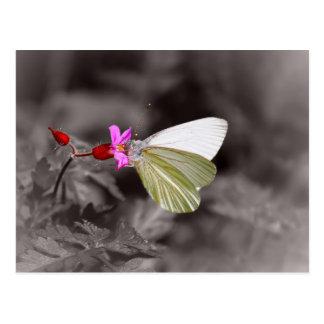 Borboleta na flor cor-de-rosa cartão postal